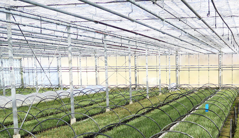 Horticultural Sector